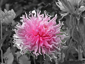 Flowergenics -Marie LeBlanc
