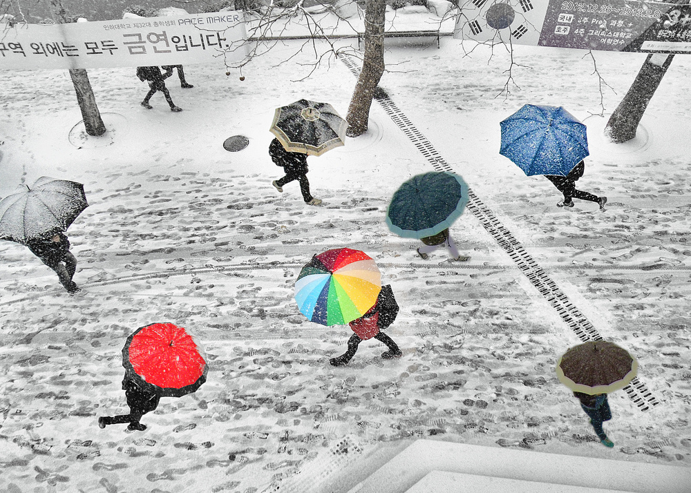 Umbrella Mania -S.M. Shajjad Hossain Shajib