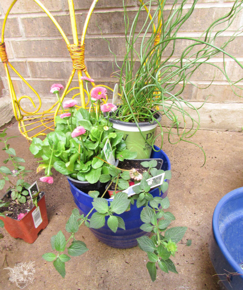 Note that each plant has a different shaped and colored leaves to add lots of visual interest. I recommend using at least three different plants in each container.