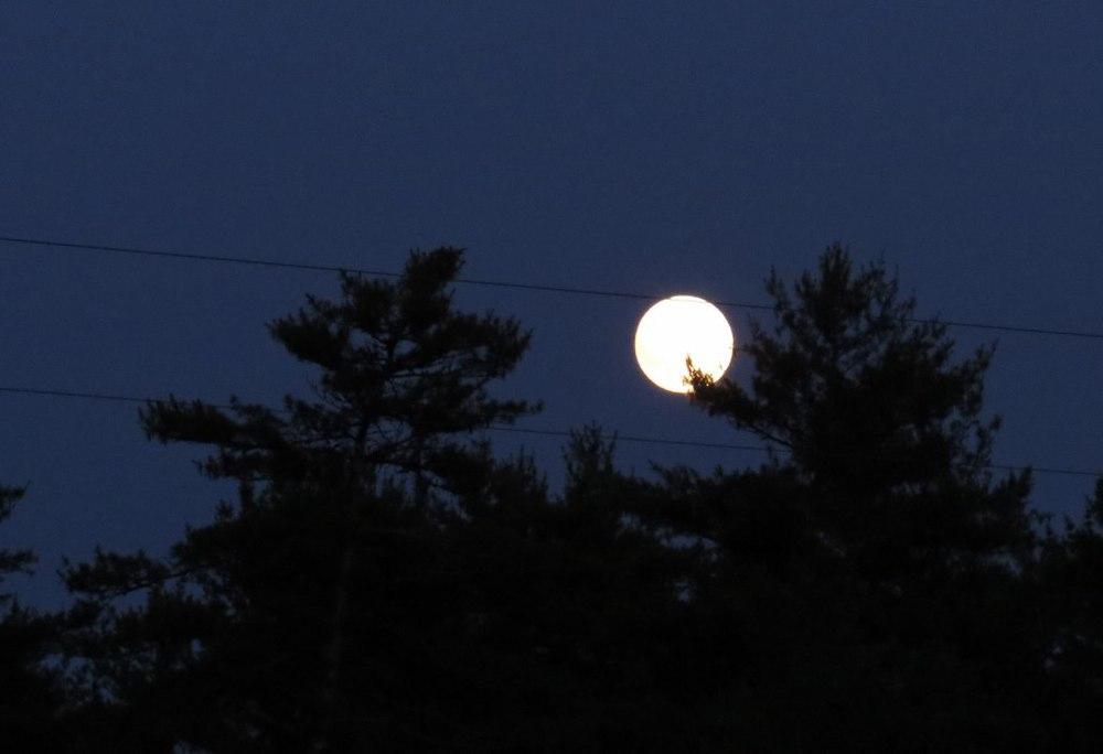Moon_7-13-14_Cynthia Nichols.jpg