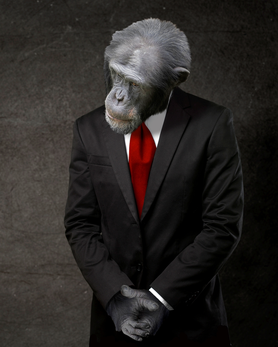 investment monkey.jpg