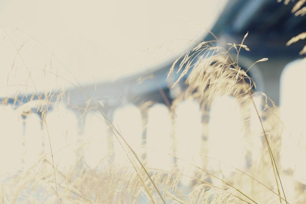 DSC07202 _Snapseed.jpg