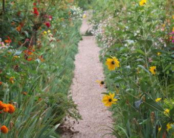 FlowerPath.jpg