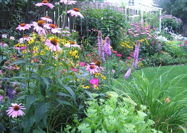 June Is Perennial Gardening Month Edwards Greenhouse