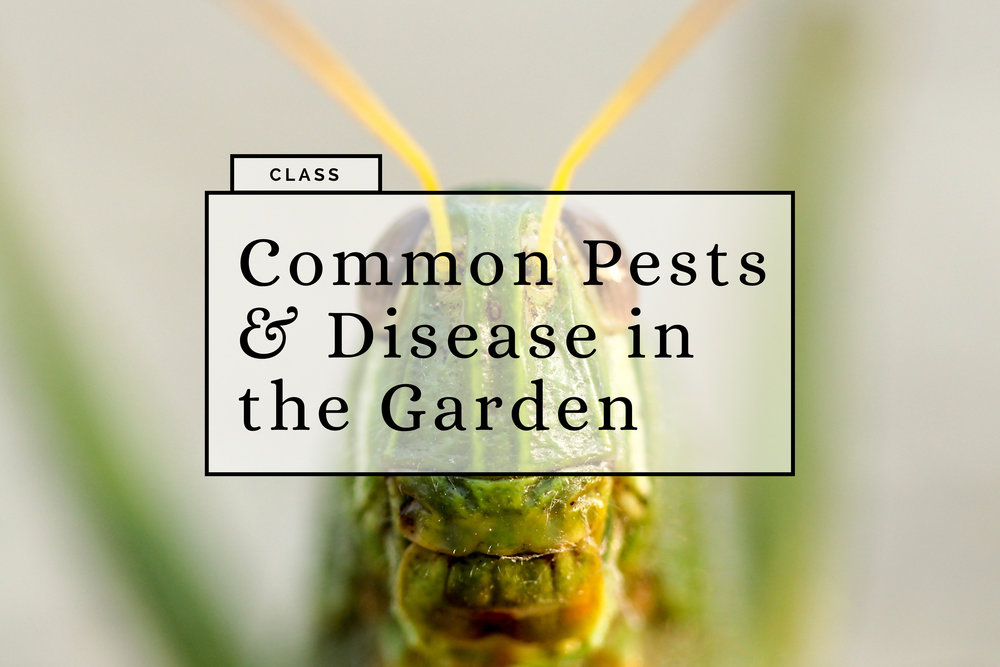 common pests and disease.jpg