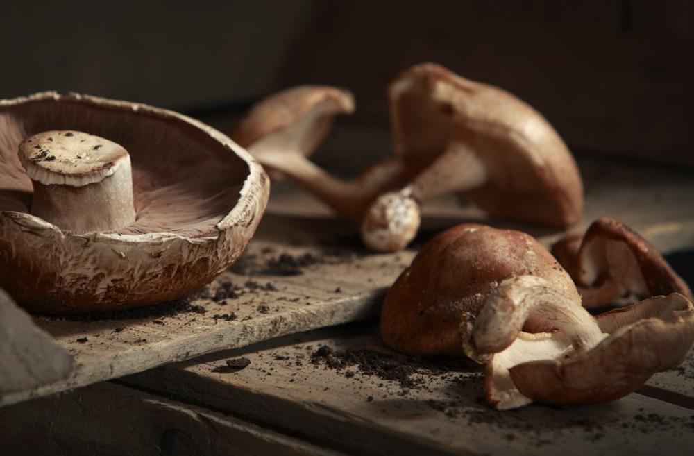 Mushrooms 1 crop.jpg