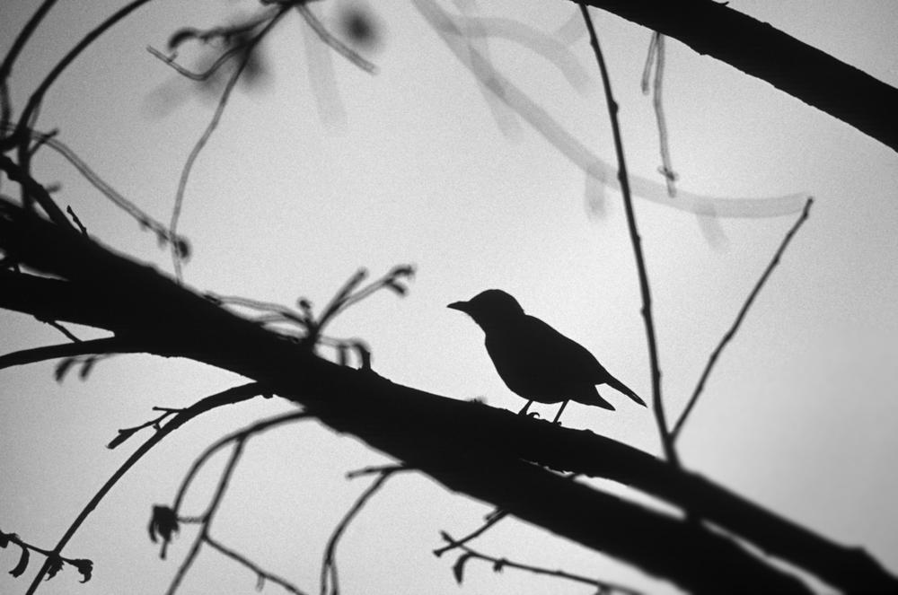 bird tree.jpg