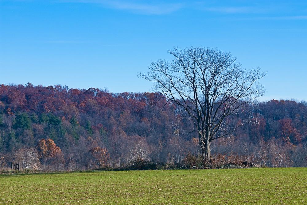 Standing Tall - Woodsboro, MD