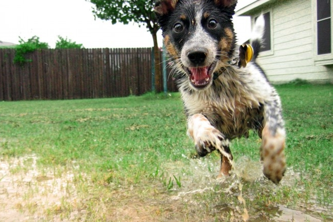 wet-happy-dog-700x525.jpg