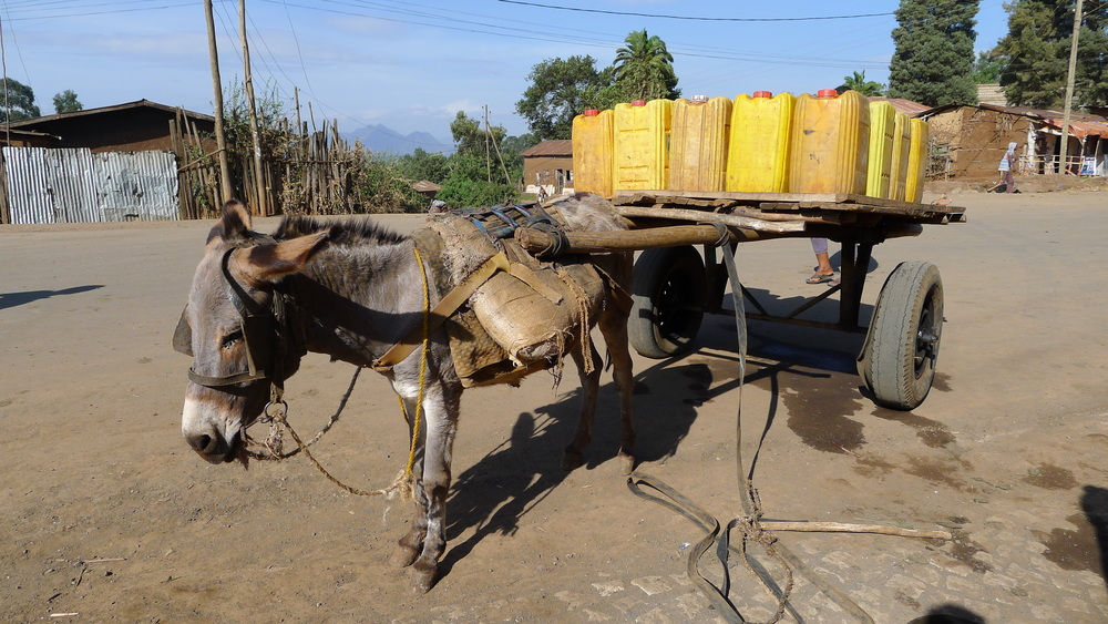 Donkeys are everywhere, carrying yellow jugs of water for local residents in rural Ethiopia.