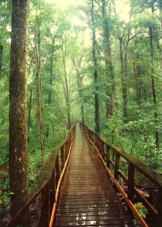 Congaree National Park, South Carolina. photo via 99 Travel Tips