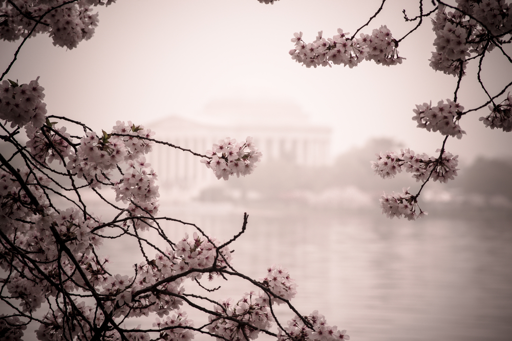 Jefferson Memorial 3/12