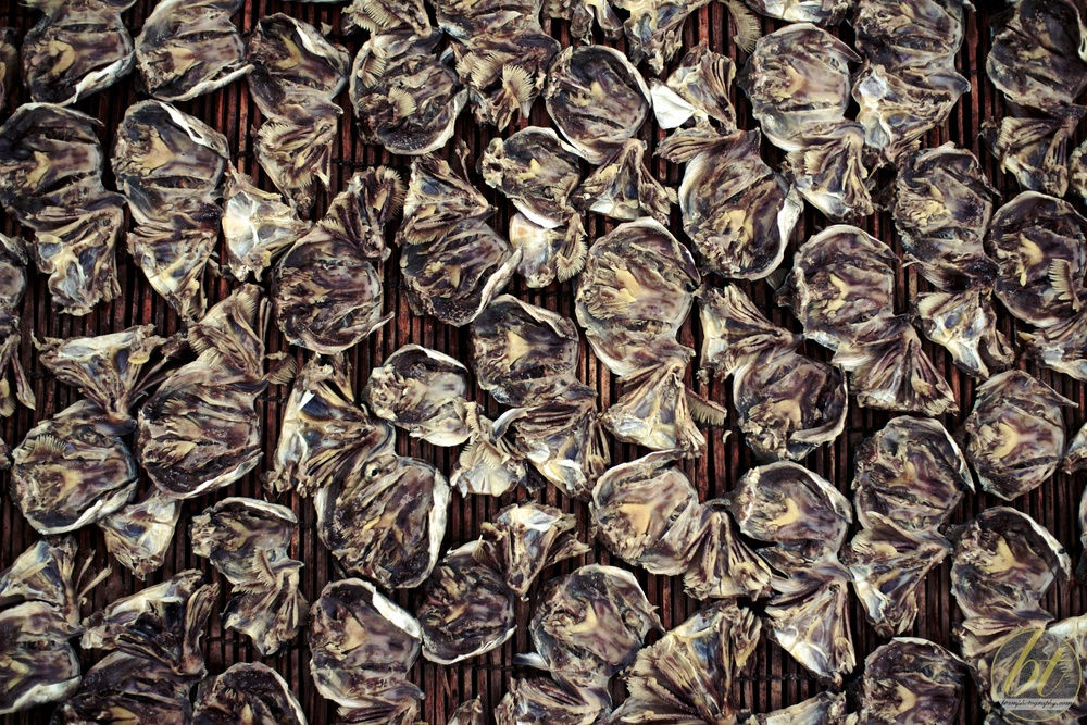 Fish heads drying in Battambang, Cambodia