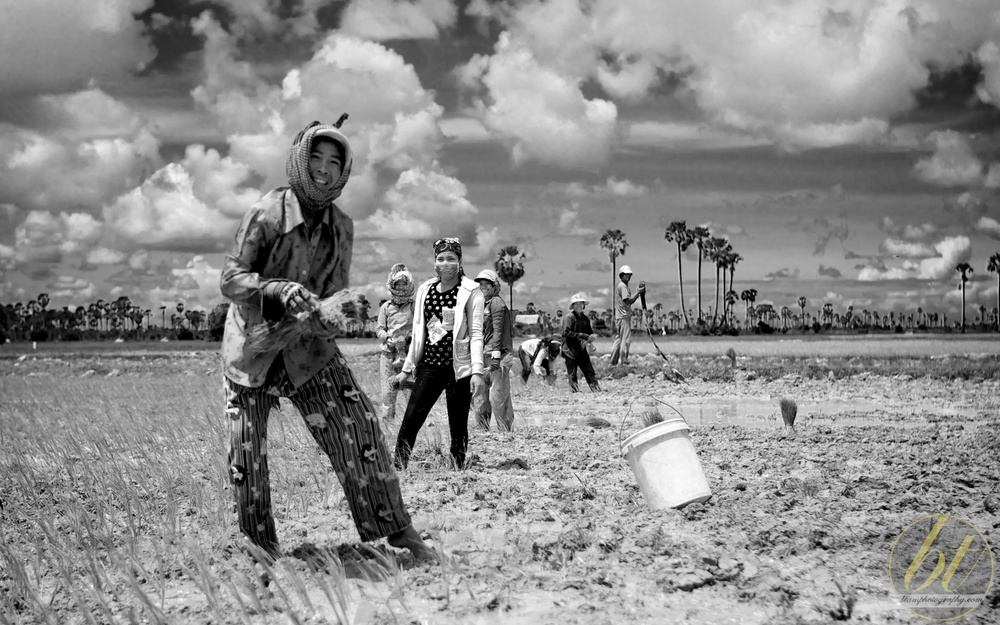 Rice paddy workers, Cambodia