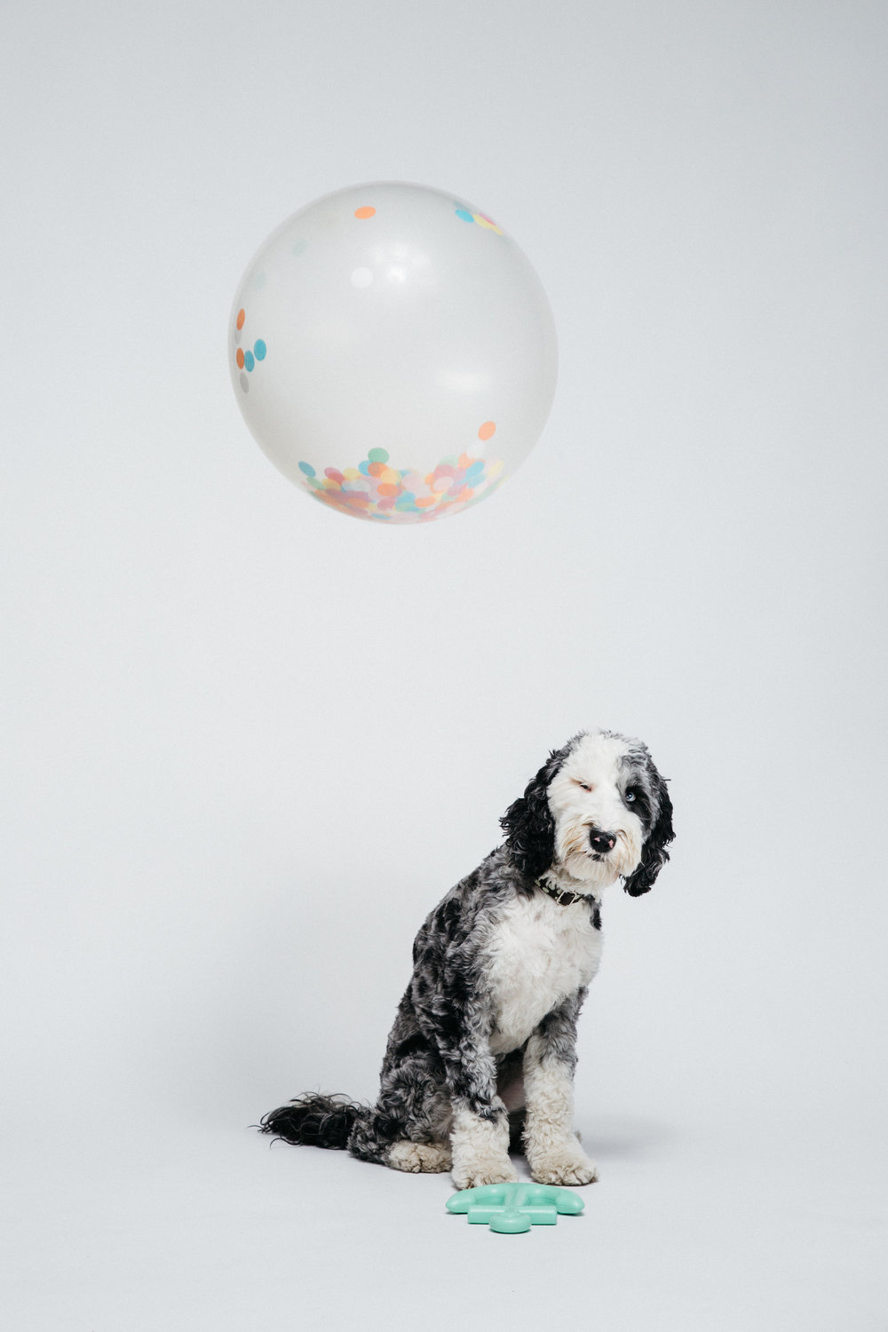 Waggo-Anchor-Toy-Styling-Dog-Pet-Graphic-Designer-Heather-Maehr.jpg