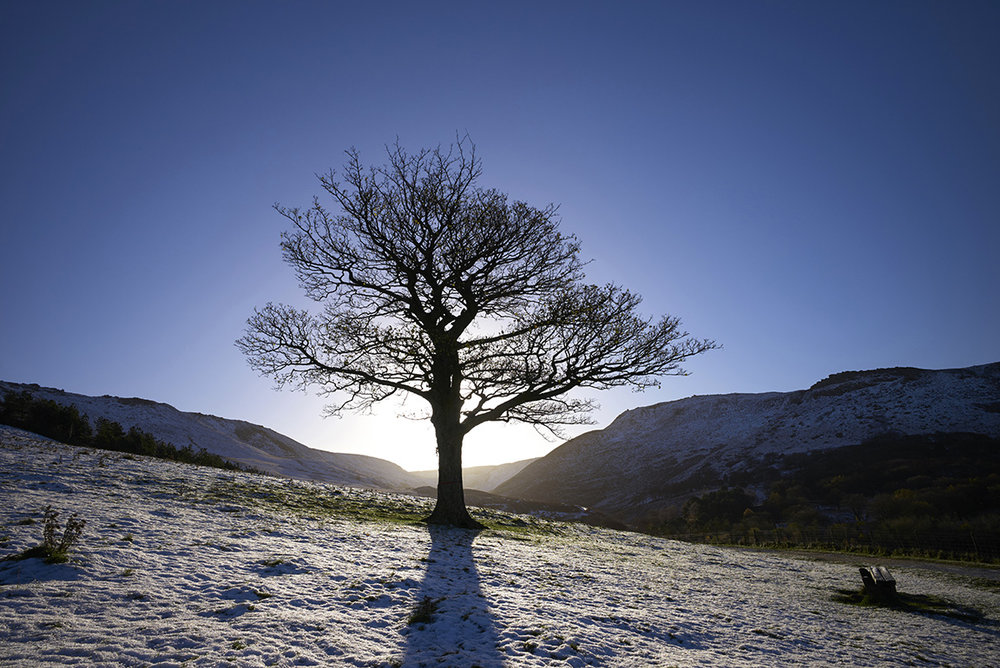 Dovestone Reservoir_Tree.jpg