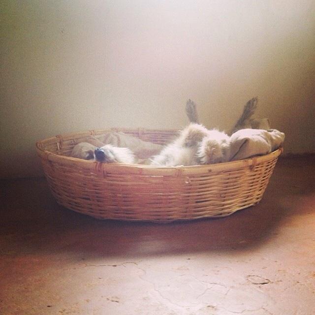 nap time Jack