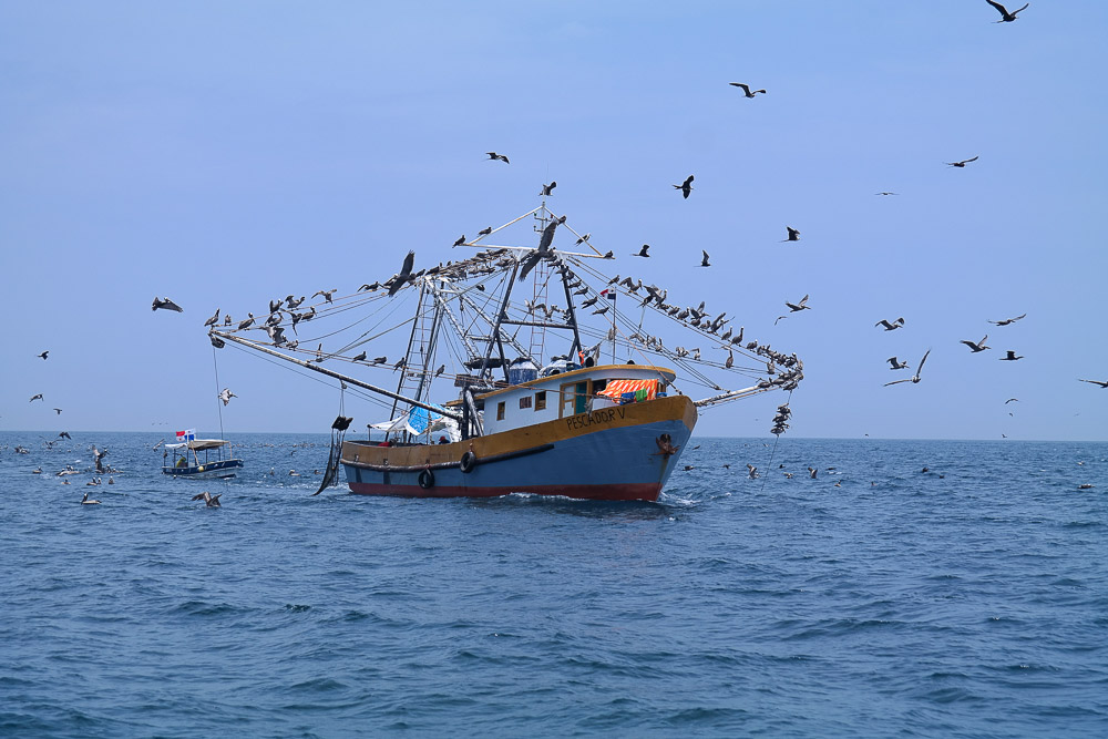 fishing boats along the South American coast