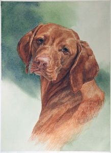 """Tess the Vizsla"" Age 3 12"" x 10"" Watercolour"
