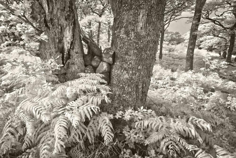 Ferns, Sheffrey Hills