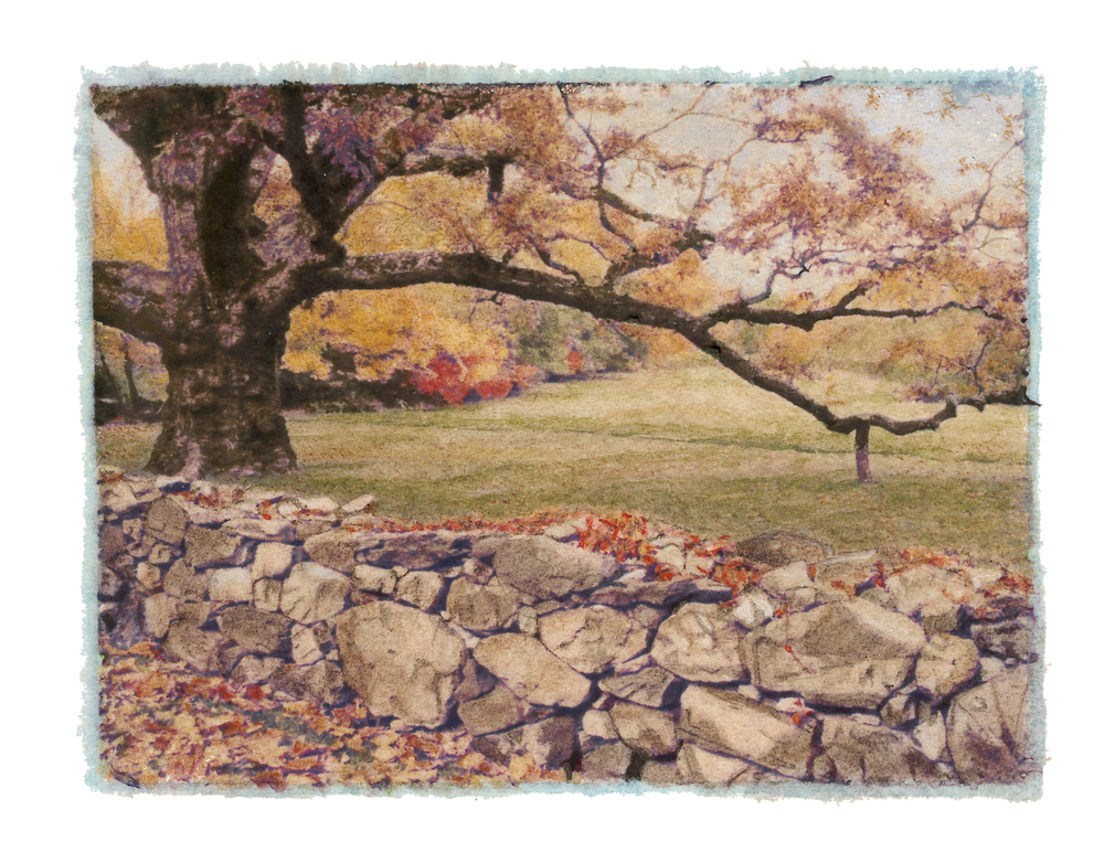Bedford Oak Fall