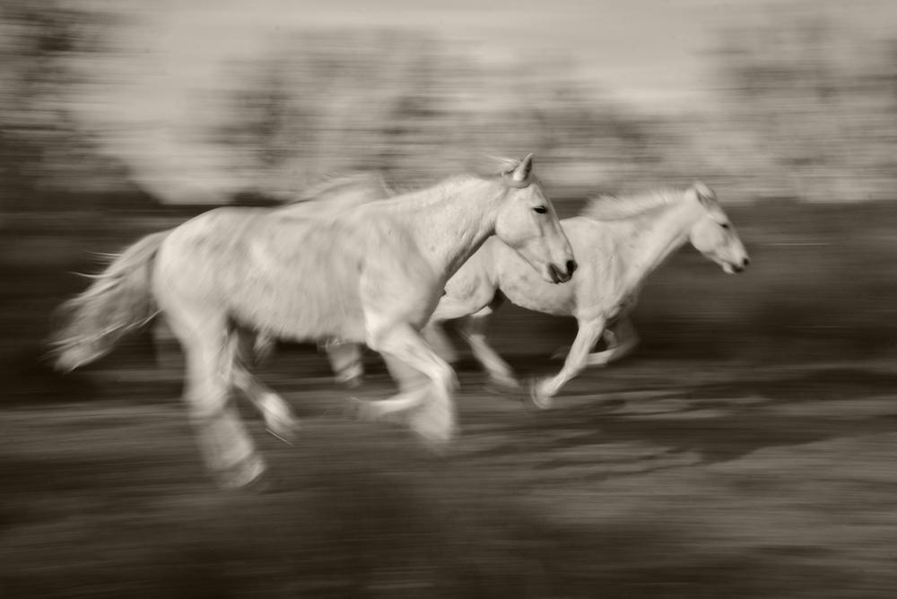 White Horse Blur