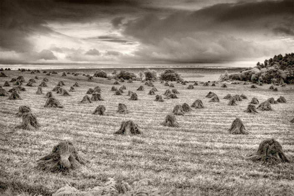 Hayfields, Lough Mask