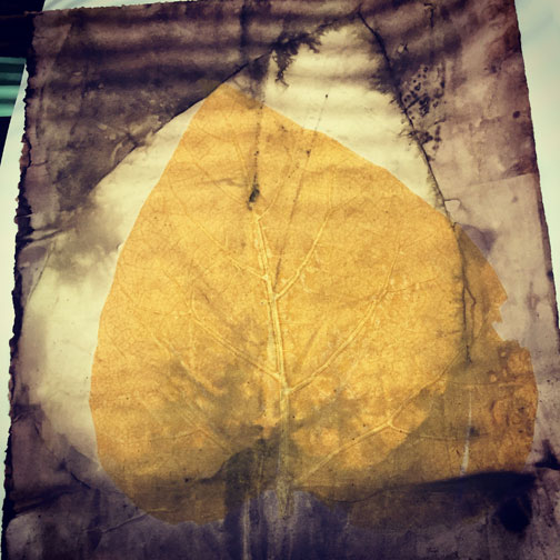Eco print on paper with Catalpa leaf and black walnut then  then over-dyed with a golden yellow transparent soy-based etching ink. (I mixed this color myself)