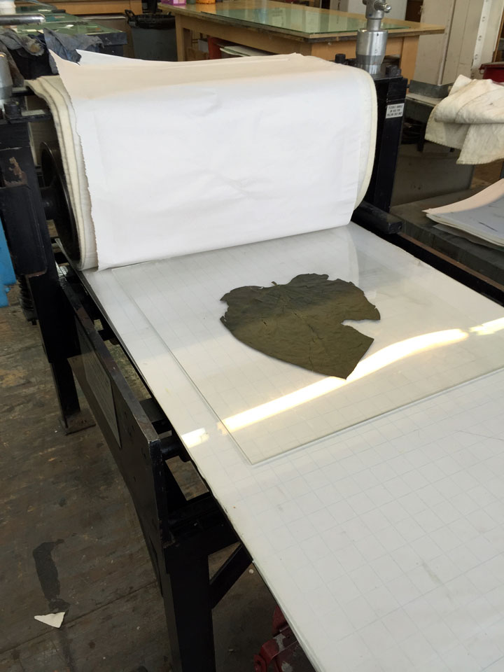 The Conrad print bed with one of my dried and flattened Catalpa leaves used here to illustrate how one might run a leaf through the press.