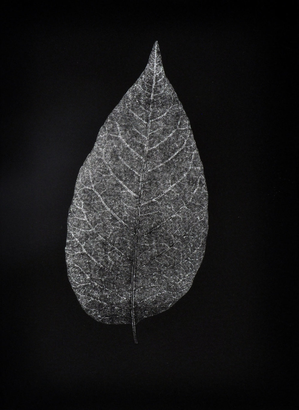 "Monotype, 2014, Christine Mauersberger dried and flattened Leaf, silver ink, black somerset paper. 5 1/2"" x 7 1/2"""