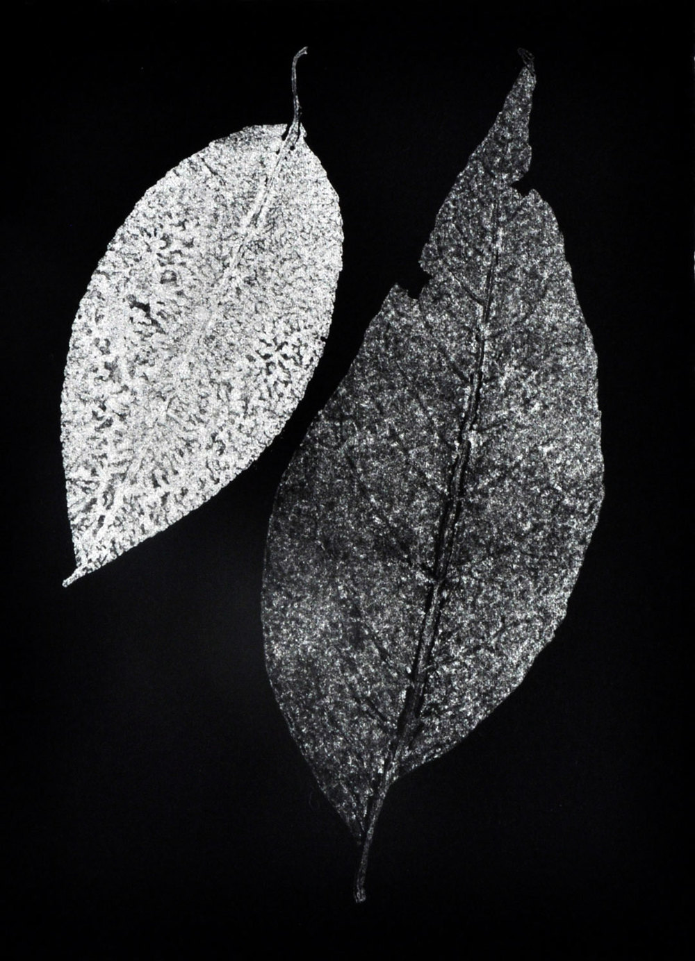 "Monotype, 2014, Christine Mauersberger dried and flattened Leaves, silver ink, black somerset paper. 5 1/2"" x 7 1/2"""