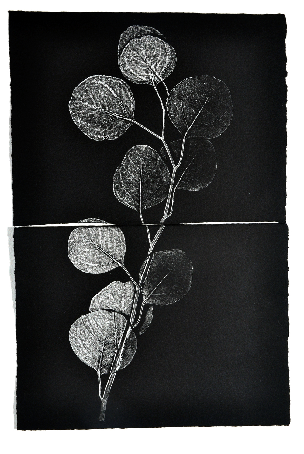 Monoprint on 2 pieces of paper, silver ink, 2014, Christine Mauersberger.
