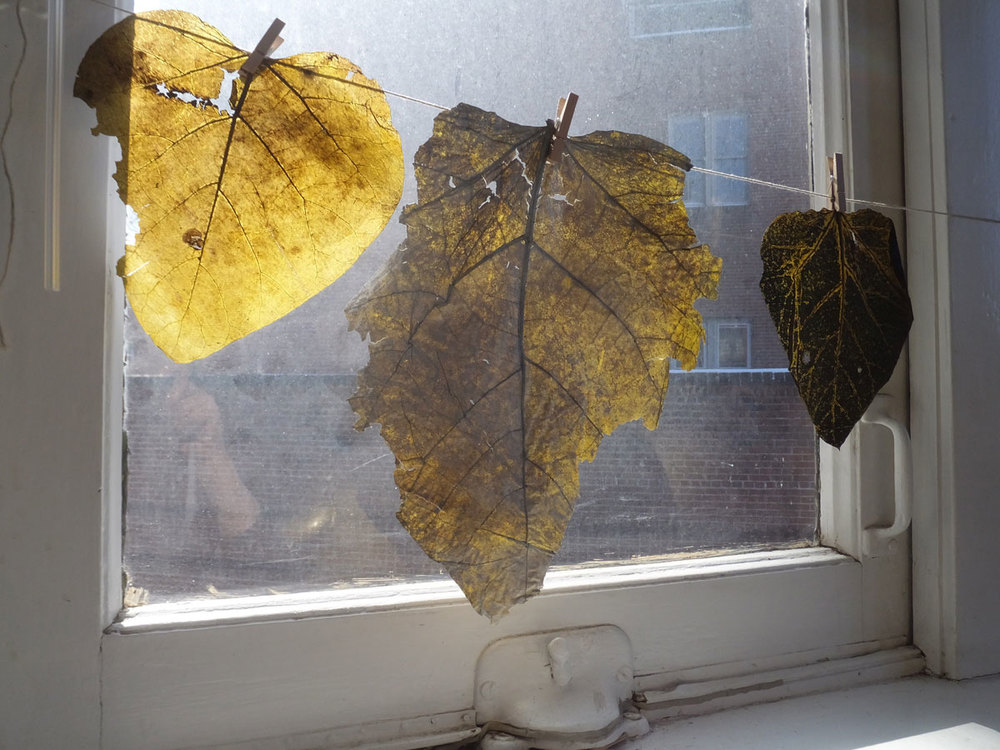 The leaves I used to make the prints themselves are part of the show as they pick up the sun and hint of warmer times then now. It's been sub zero in Cleveland off-and-on for weeks.