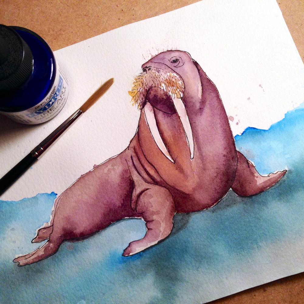 02-140108-walrus.jpg