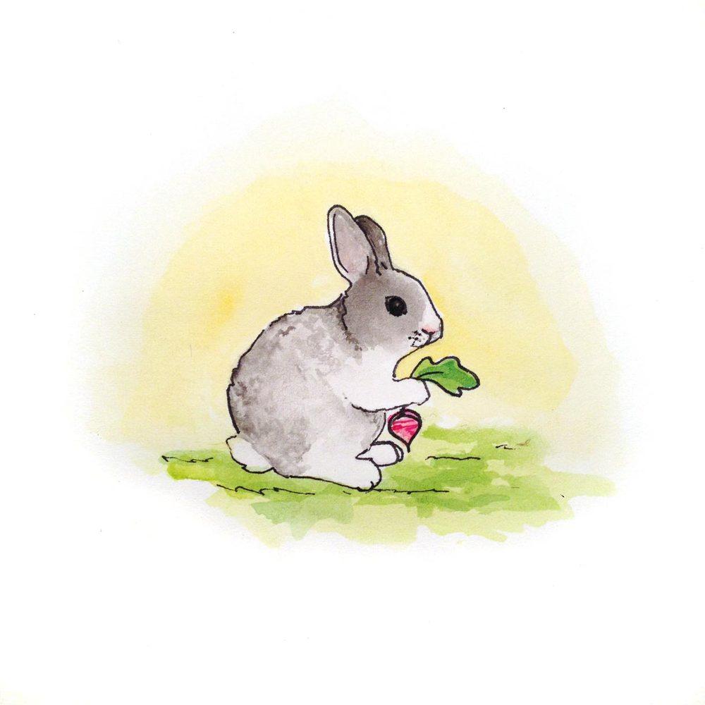 16-140416-rabbit.jpg