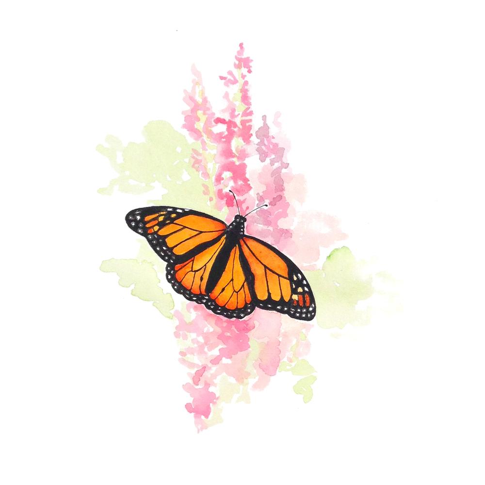 23-140604-butterfly.jpg