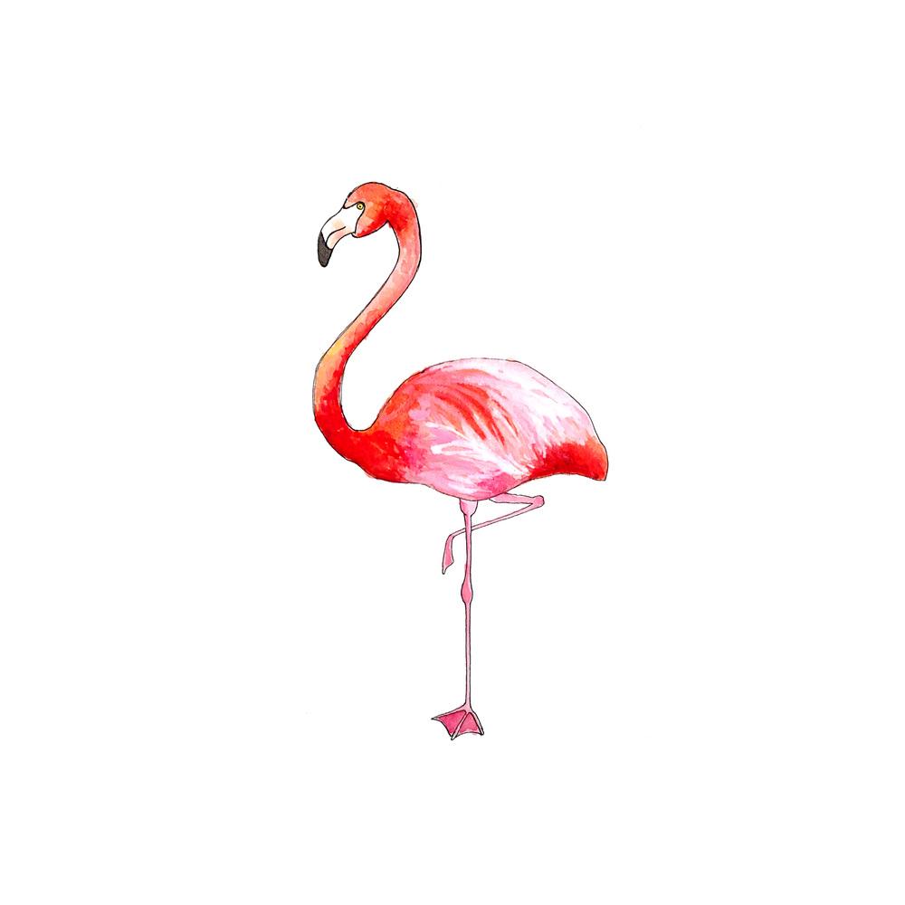 30-140729-flamingo.jpg
