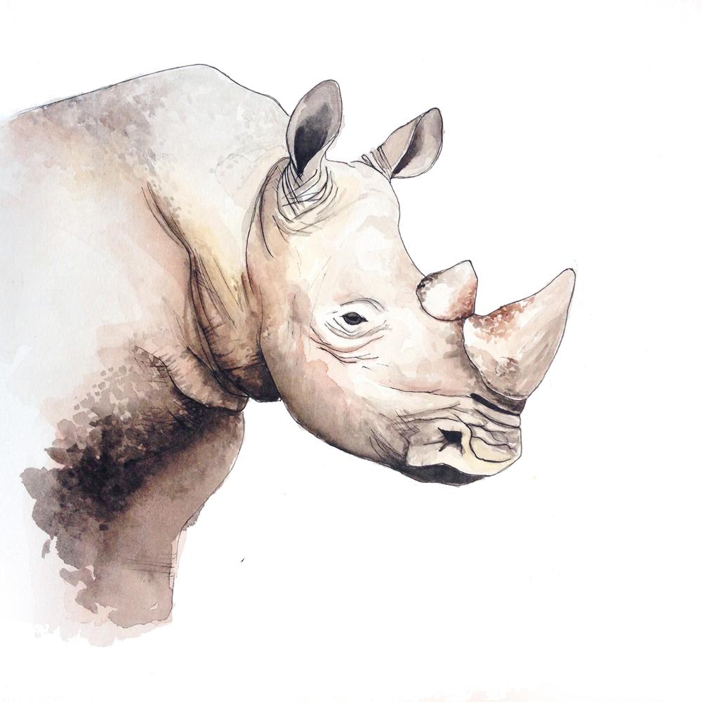 33-140813-rhino.jpg