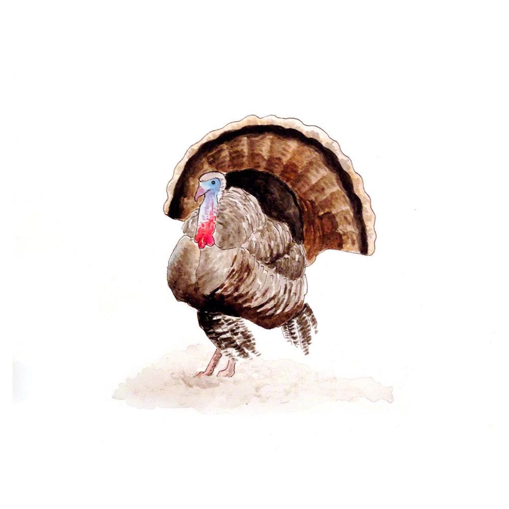 47-141125-turkey.jpg