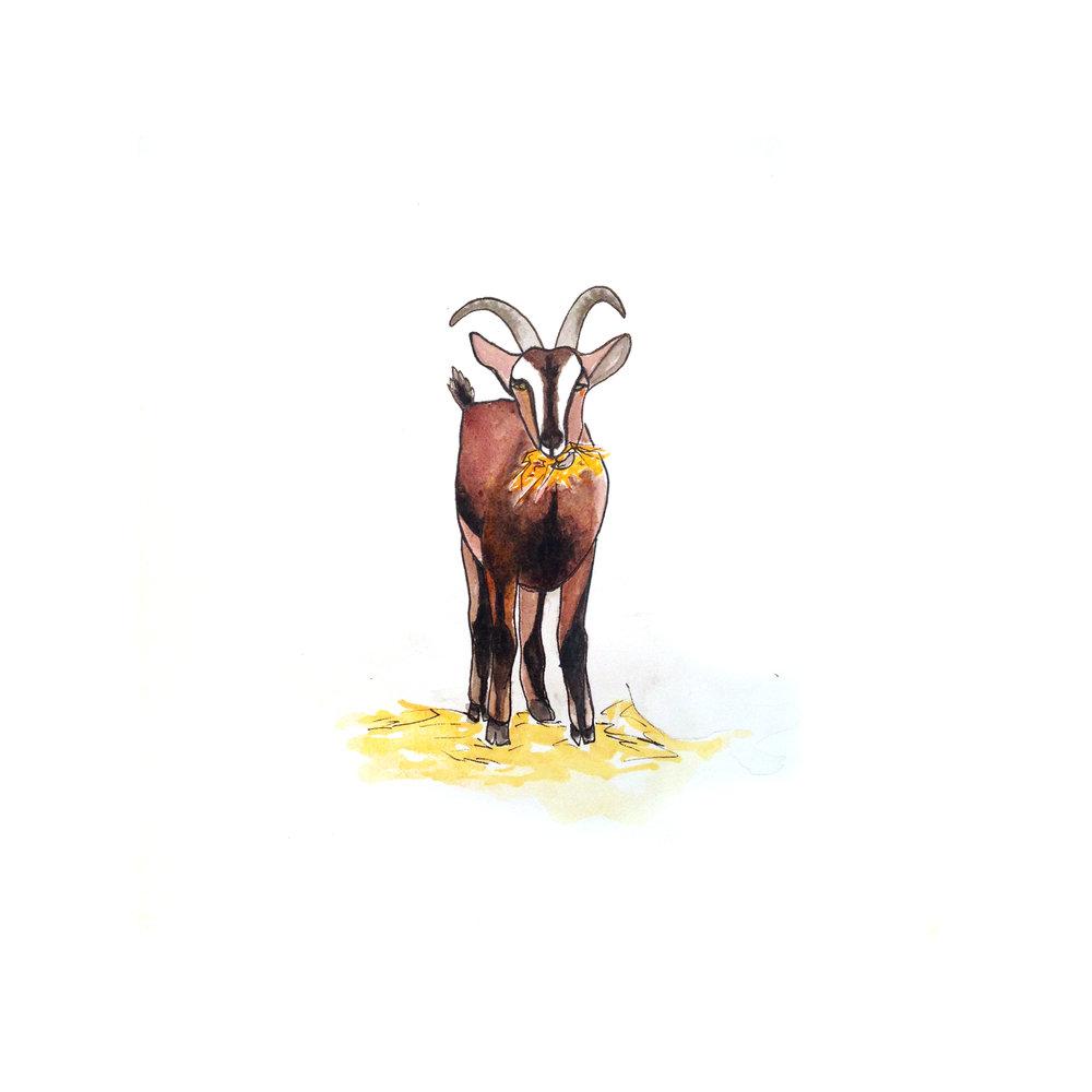 25-140618-goat.jpg