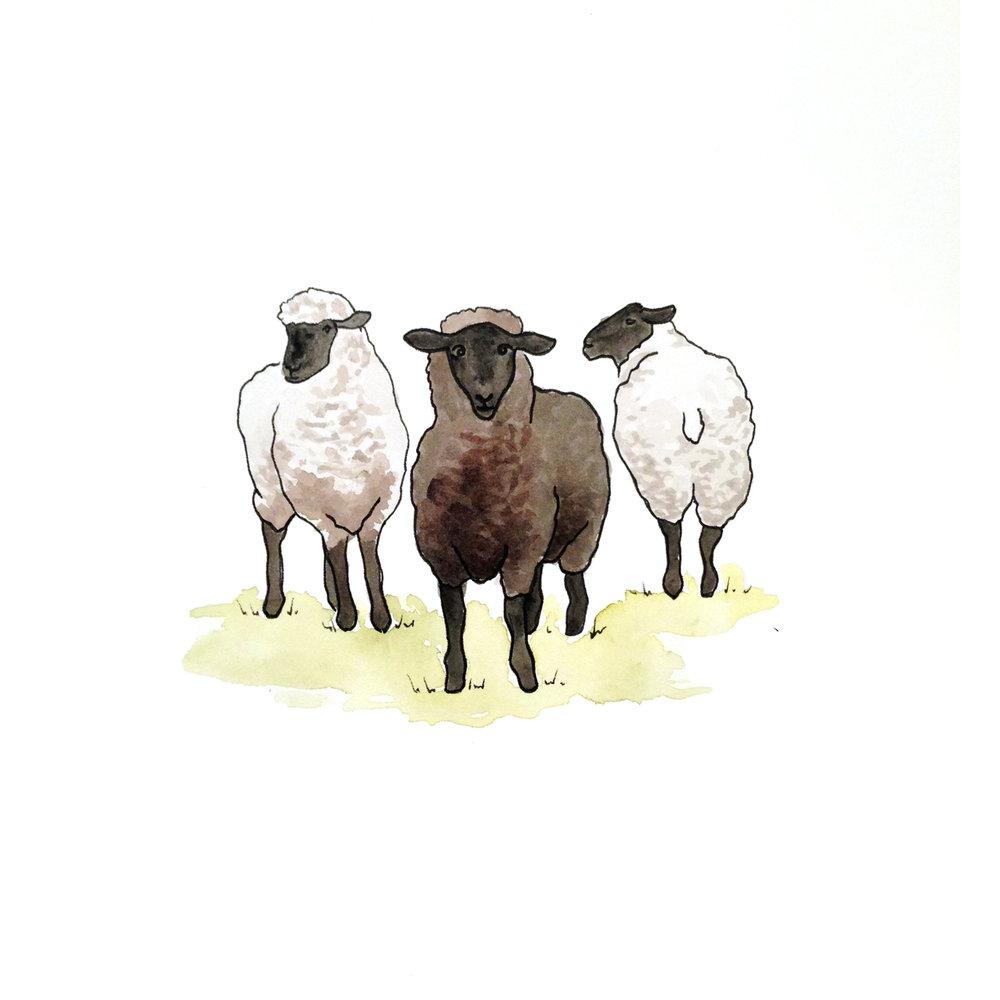 26-140624-sheep.jpg