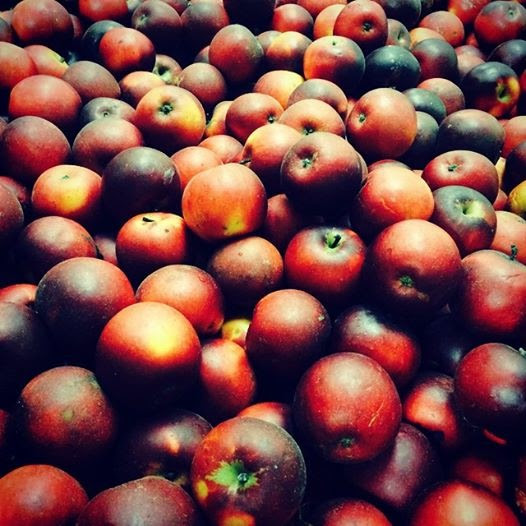 A bin of Arkansas Black apples