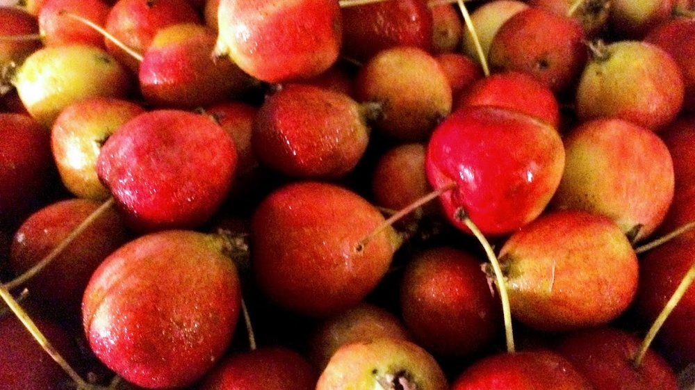 Crab apples foraged in Black Mountain, NC
