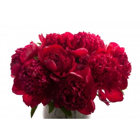 red-peony-bouquet-1.jpg
