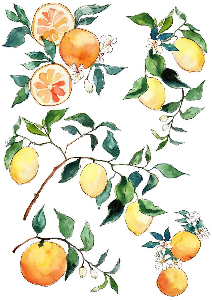 citrus_blossom_1024x1024.jpg