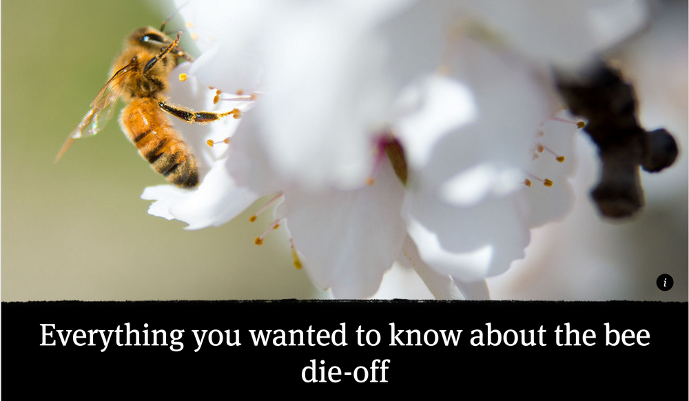 http://www.revealnews.org/article/everything-you-wanted-to-know-about-the-bee-die-off/