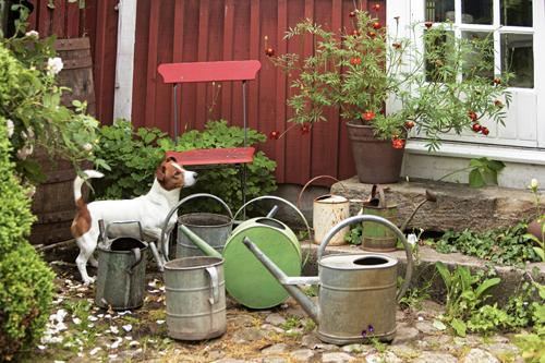Fler vattenkannor än de flesta behöver, men om de är vackra att titta på har de en självklar plats i trädgården, precis som hunden Lukas.
