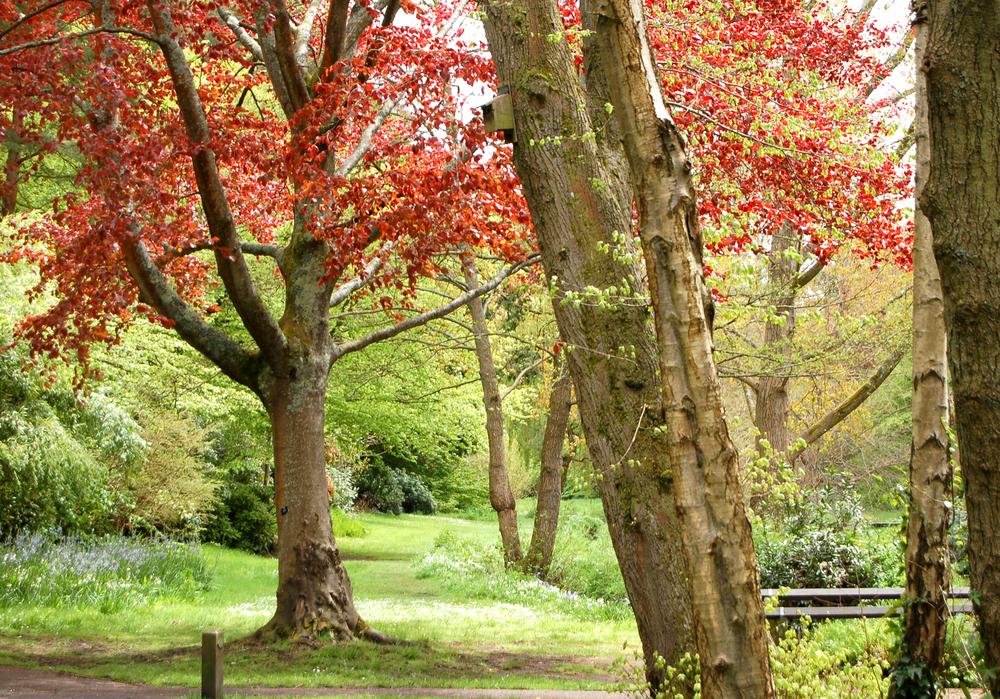 Bournemouth gardens