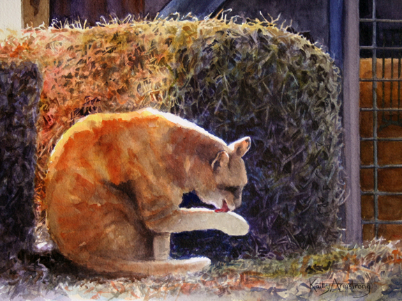 """The Barn Cat"""