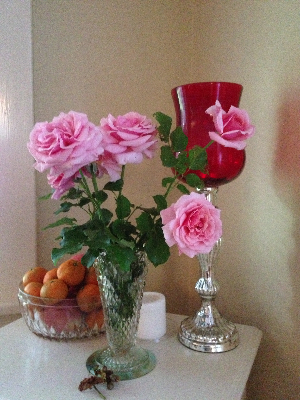 Perfect pink roses from our Nashville garden.